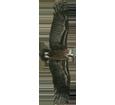 Immagine Avvoltoio monaco