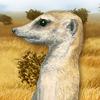 Cucciii - giocatore Lionzer
